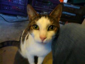Goed gezelschap: een kat